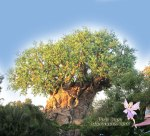 Animal Kingdom, Tree of Life